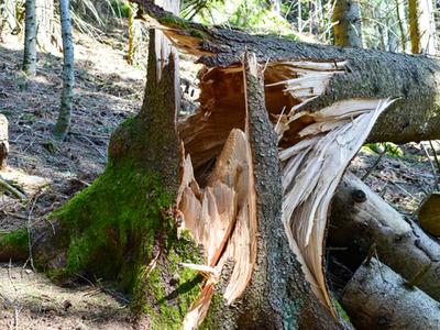 Split tree that has fallen down on a piece of property