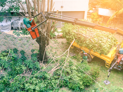 Professional tree expert providing tree trimming in a backyard