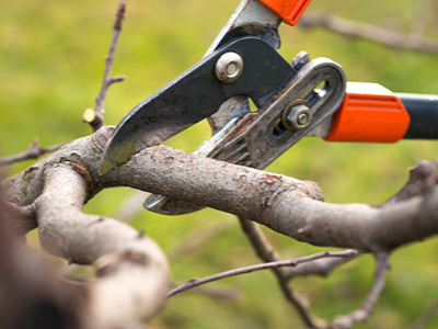 Tree trimming of a relatively small limb